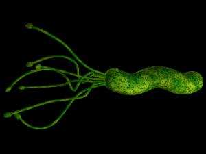 bactéria H. Pylori