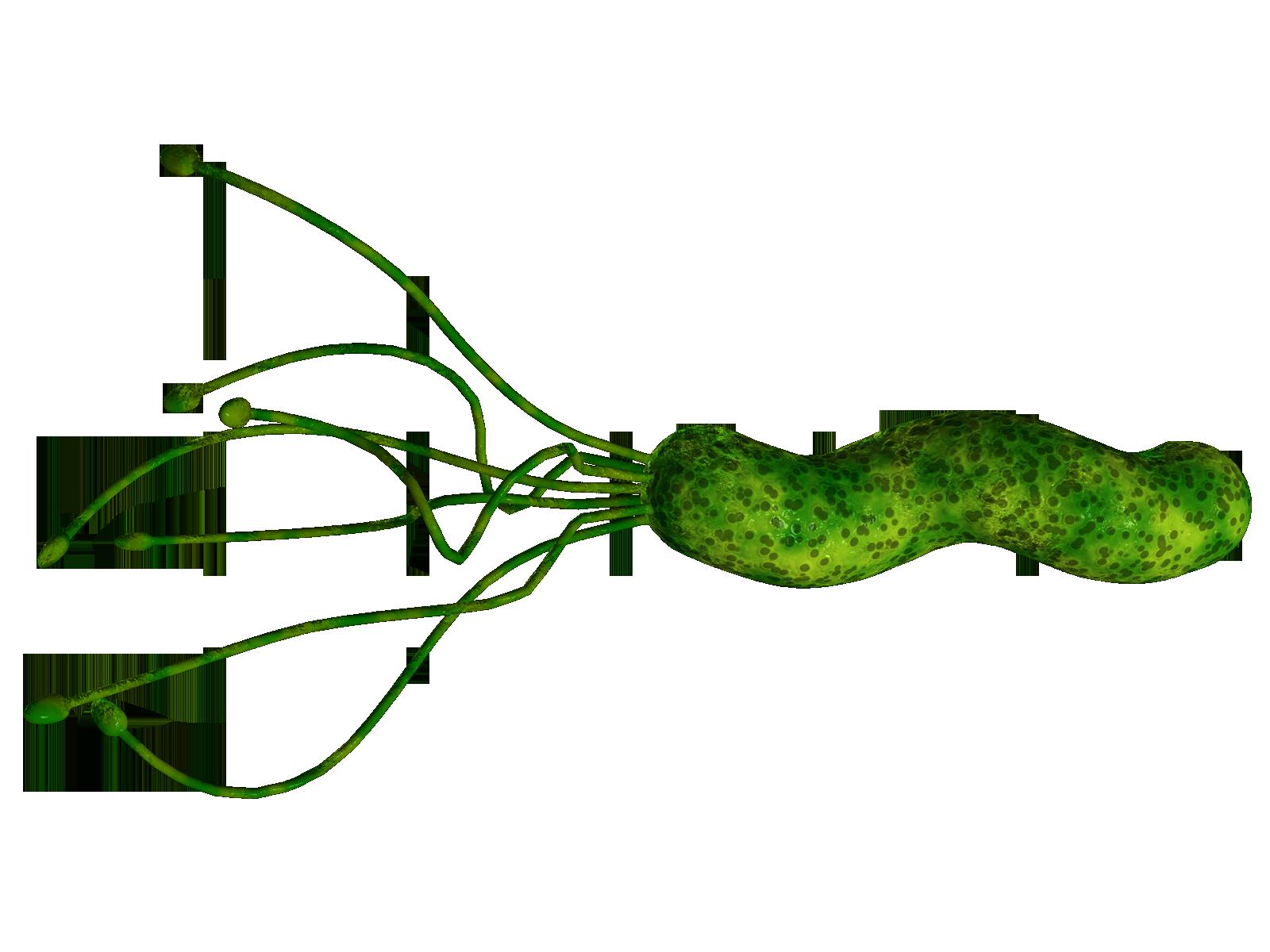 foto bacteria: